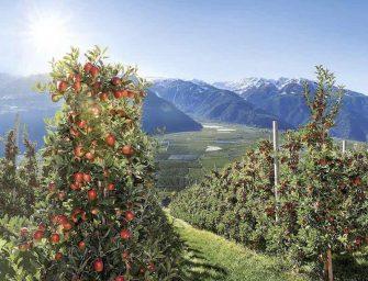 Mela Val Venosta: senza erbicidi circa il 30% della superficie coltivata