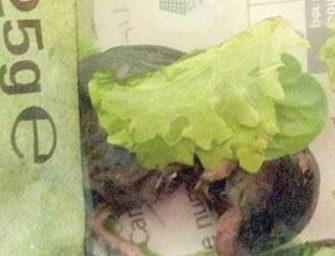 Topo nell'insalata in busta: la scoperta shock di una coppia di Genova