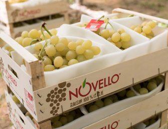 Novello riporta in tavola il gusto autentico dell'uva. Al via campagna 2018/19
