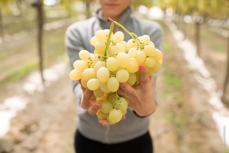Novello uva Italia