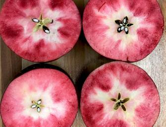 Kissabel: arriva il raccolto delle mele a polpa rossa dell'Emisfero Sud