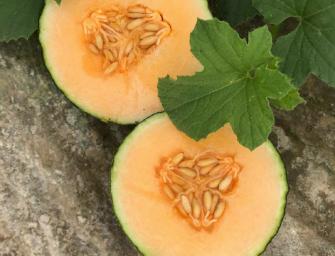 L'Orto di Eleonora lancia un nuovo prodotto estivo: il melone Corallo