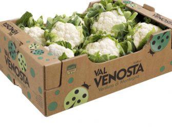 Cavolfiore Val Venosta, produzione estiva a 3.700 tonnellate