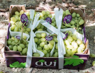 ARRA, cresce la richiesta di uve di fascia premium. Ora c'è anche la bio