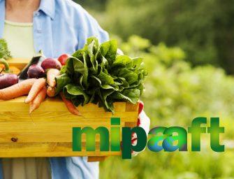 Mipaaft, il ministero cambia nome. Etichette da sostituire per 280 mila aziende che producono bio, Dop e Igp