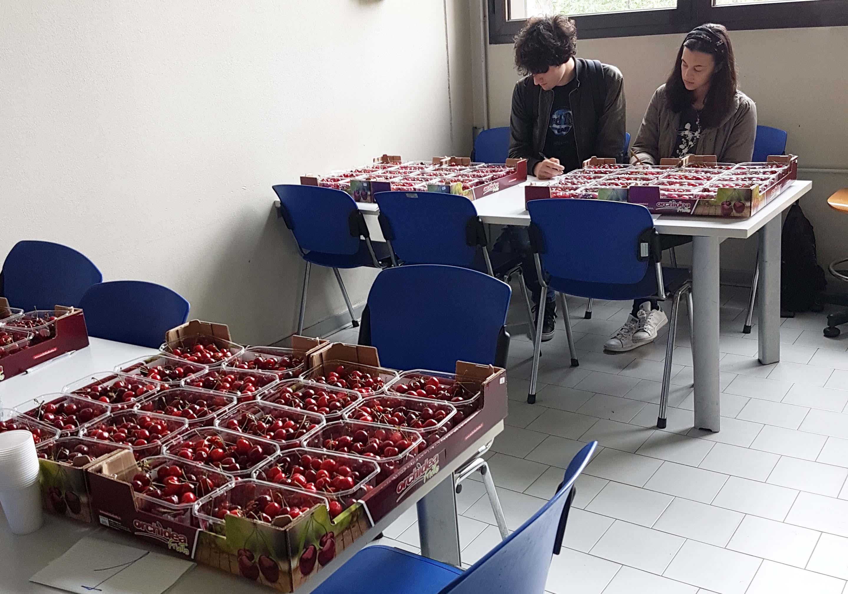 Panel test Bestack ciliegie