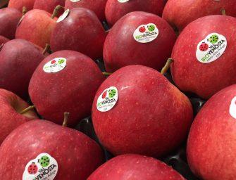 Bio Val Venosta: 980 ettari di mele bio entro il 2021 e sviluppo in Far East e Brasile