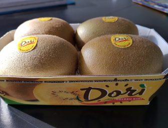Dorì, il kiwi giallo precoce alla conquista dei mercati globali. 2500 tons. previste