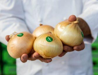 Clara, la cipolla dolce di Andrea Plafoni protagonista nei mercati ortofrutticoli