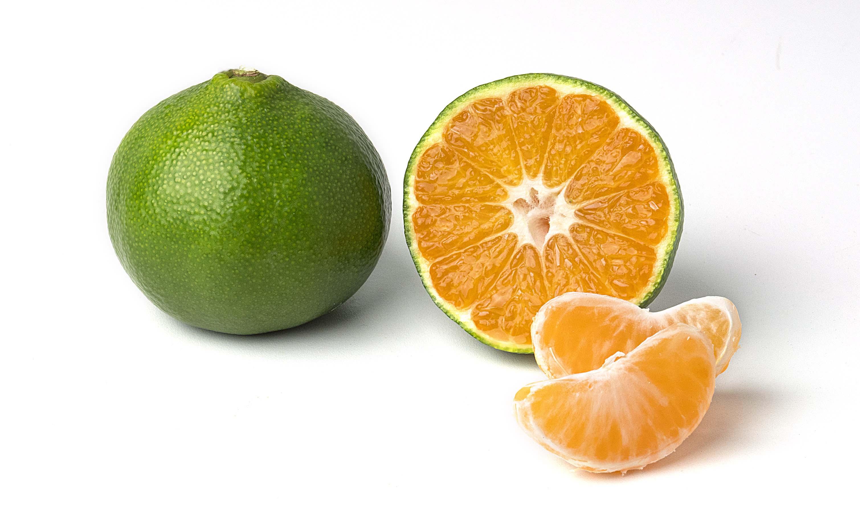 Miyagawa mandarino Oranfrizer