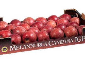 """Torna sui banchi la mela Annurca. Coop Sole: """" Qualità ottima. Previsti 4-5 mila q.li"""""""