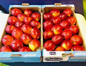 "Novità Melinda: Morgana, la mela""più succosa di sempre"", si presenta a Madrid"