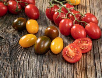 Crescono in Gdo i pomodori premium di Gandini. Azienda hi-tech e sempre più green