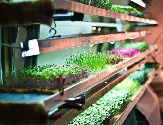"""Vertical farming, a Parigi il più grande orto """"in-store"""" apre da Metro"""