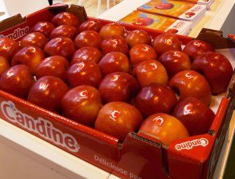 """Candine, la nuova mela di Apofruit """"dolce come una caramella"""", resistente e produttiva"""