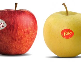 Envy e Yello, tornano sul banchi le mele club dei consorzi VOG e VI.P. Volumi in crescita