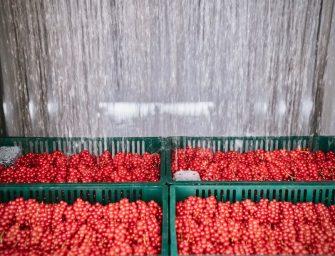 Sant'Orsola, frutti più belli più a lungo con l'innovativa tecnologia di hydrocooling