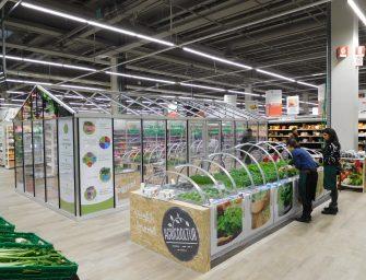 Auchan lancia a Torino la serra al supermercato con microgreens e insalate a residuo zero
