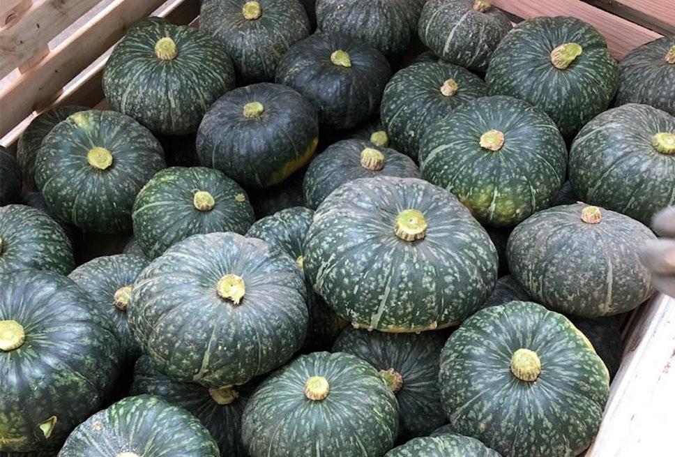 zucche Senegal Francescon