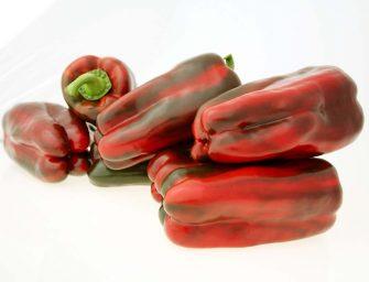Peperone: le varietà di BASF per sfruttare il potenziale produttivo e di mercato di questa crop