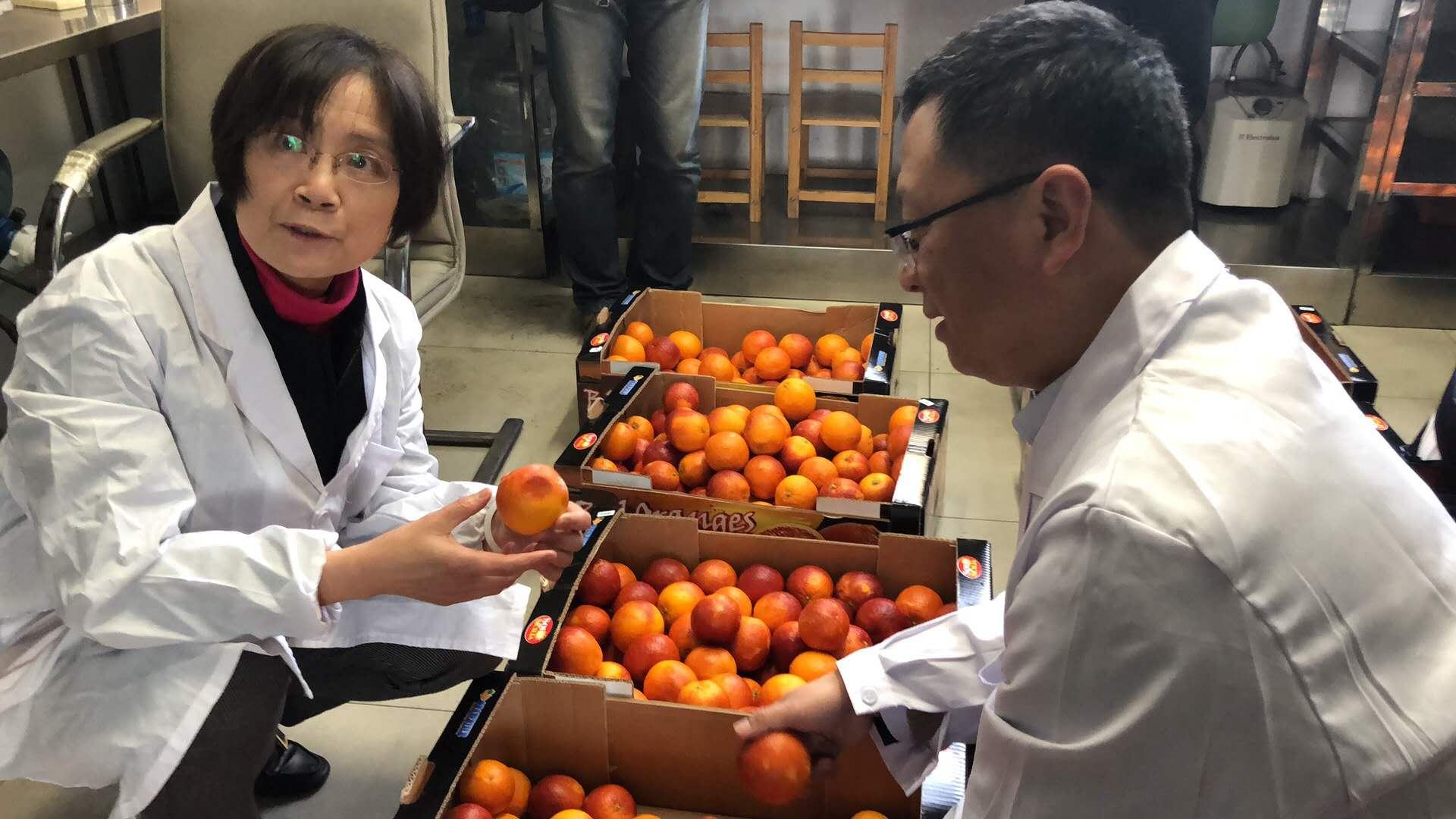 arance Oranfrizer Cina
