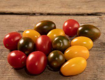 Colorati sì, ma di alta qualità. Funziona in Gdo il mix di pomodori datterino di Gandini