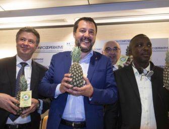 Salvini scopre l'ananas dolcetto di Alce Nero, bio e solidale