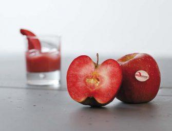 Red Moon, la mela a polpa rossa di Clementi al primo bilancio commerciale