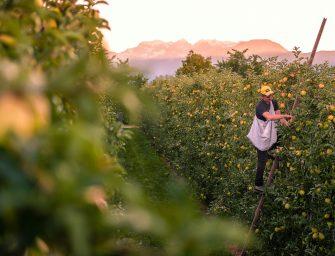 Melinda, 30 anni della mela più famosa d'Italia. Novità e sfide future