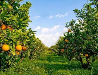 Il decreto emergenze agricole è legge. Arriva il prezzo minimo per l'ortofrutta