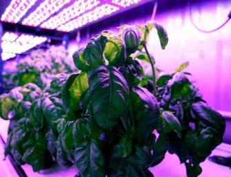 """Ricerca, al MIT con il basilico high-tech l'agricoltura diventa """"cyber"""""""