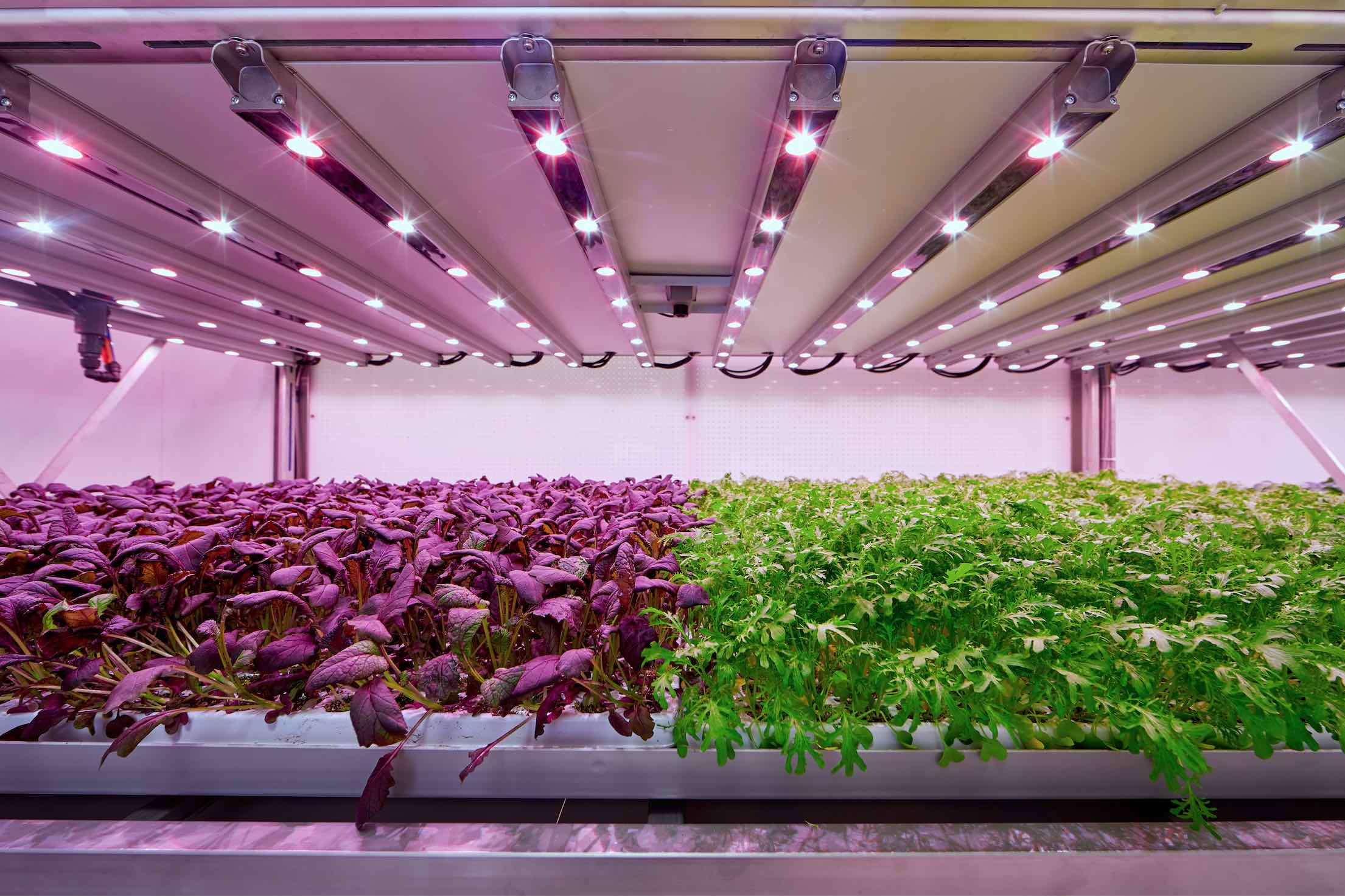 Planet-Farms-Milano-vertical-farming