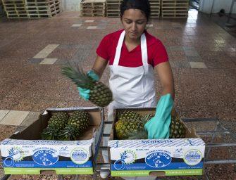 Nicofrutta, oltre 500 mila euro per l'ananas Fairtrade della Costa Rica