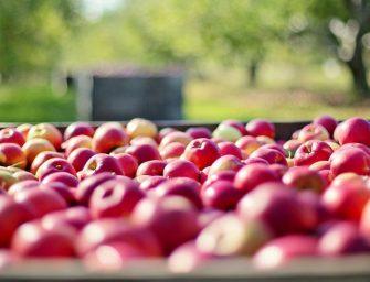 Maltempo, significativa riduzione del raccolto di mele in Polonia nel 2019