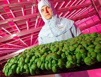 """Uk, Ocado """"sposa"""" il vertical farming: investiti 17 milioni di sterline"""