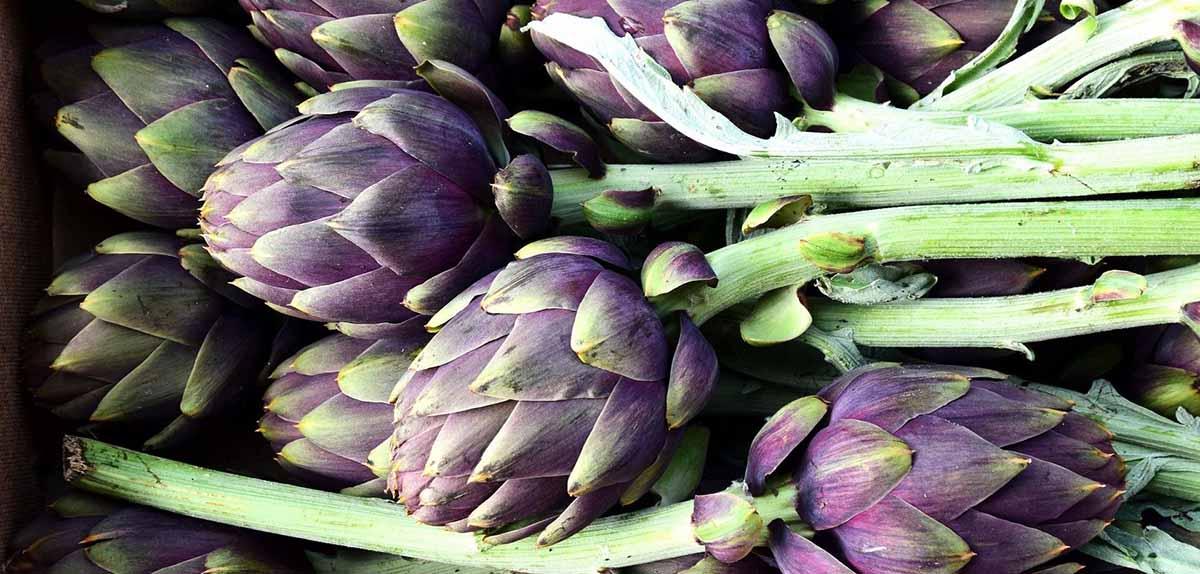 Carciofo Violetto di Foggia